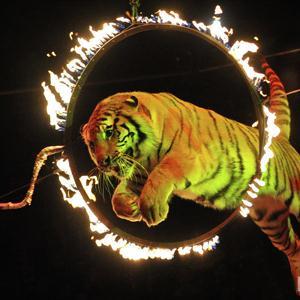 Цирки Марьяновки