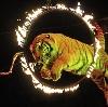 Цирки в Марьяновке